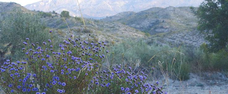 Fantastische Natur um die baubiologisch renovierte Bio- Finca (Ferienhaus) herum, Auszeiturlaub, Offlineurlaub, Retreat ohne WLAN möglich mit Weitblick bis zum Mittelmeer