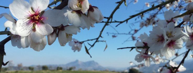 Vegane Unterkunft für Deinen Urlaub in Andalusien - Wandern, Mountainbike, Rennrad, Motorrad