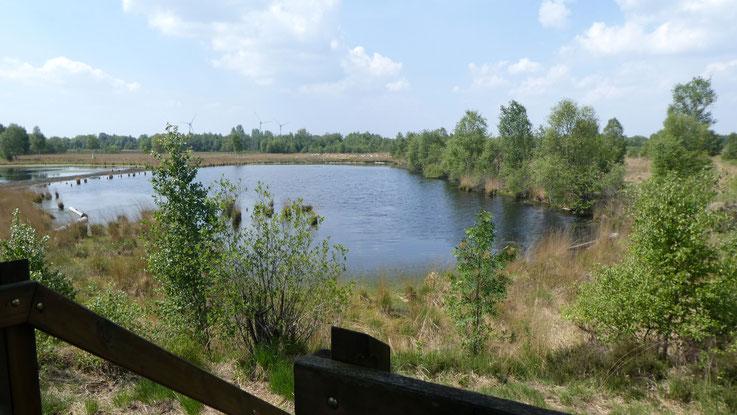 Aschendorf Moor