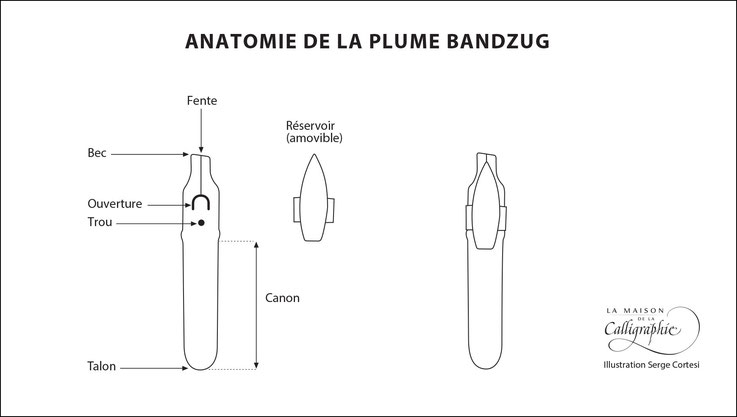 Anatomie de la plume Bandzug