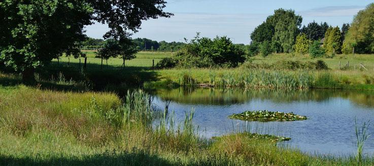 Ein schöner Teich auf der Fahrt von Slek zur Abtei Lilbosch (NL)