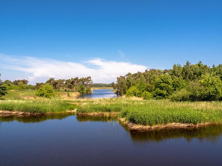 Außer einer ziemlich platten Landschaft mit viel Wasser und Reet ist eigentlich nicht zu sehen. Aber schön ist es schon.
