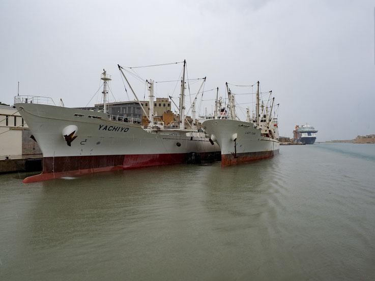 Zwei Reeferschiffe einer japanischen Reederei, sie transportieren und verarbeiten Tunfische.