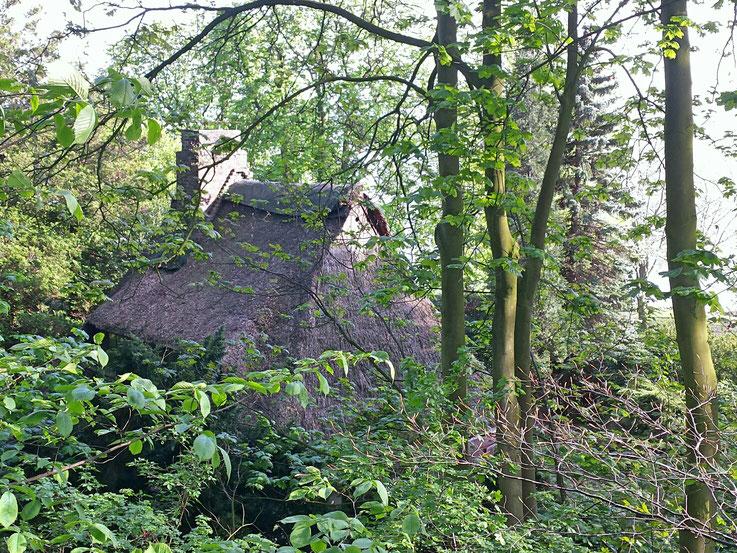 Wald, Hexenhaus, Reetdachhaus