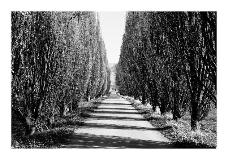 Schwarzweissfotografie, kreative Fotografie, Fototipps