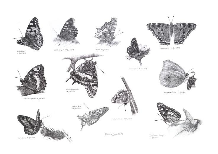 Schmetterlinge Slowenien