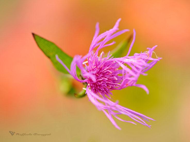Fantasia floreale