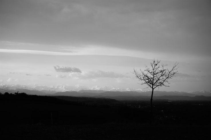 Le dernier arbre, Muret, France