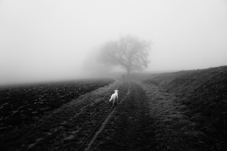 Pyrénées et brouillard, Muret, France
