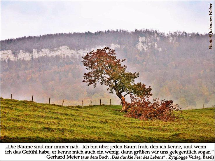 Gerhard Meier Zitat: Die Bäume sind mir immer nah. Ich bin über jeden Baum froh, den ich kenne, und wenn ich das Gefühl habe, er kenne mich auch ein wenig, dann grüßen wir uns gelegentlich sogar. Foto Johannes Weber. Archiv Pedro Meier Artist Niederbipp