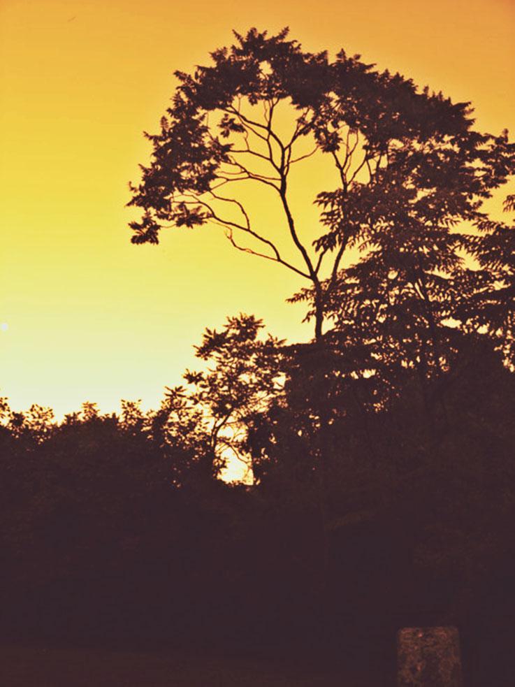 Pedro Meier PhotoArt – Abend mit Essigbaum im Garten von Amrain – Gerhard Meier Weg Niederbipp – 88. Geburtstag von Gerhard Meier 2005 – Photo © Pedro Meier Multimedia Artist / ProLitteris