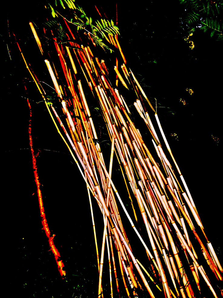 Pedro Meier – Bamboo installation 2017 – Land art Project – Studio garden Niederbipp, Gerhard Meier-Weg, Switzerland – Also studios Olten and Bangkok, Thailand – VISARTE, IAA AIAP UNESCO, International Association of Art, Art-Forum museum – © Pedro Meier
