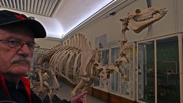 Pedro Meier – Ai Weiwei – »Selfie-Art-Project with skeleton of the camel« – »D'ailleurs c'est toujours les autres«, Musée cantonal des Beaux-Arts, Lausanne, (Uli Sigg – Bernard Fibicher), Pedro Meier Multimedia Artist Gerhard Meier Weg Niederbipp, Bangkok