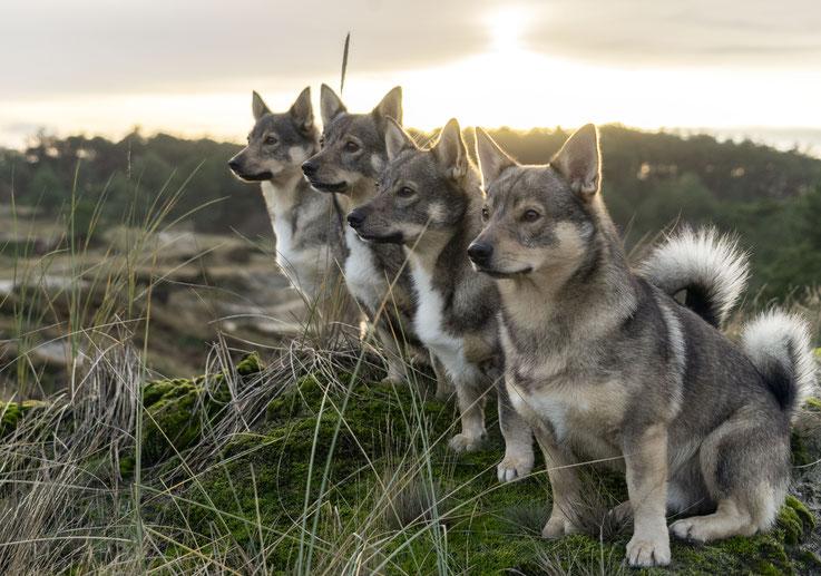 V.l.n.r. Niike, Onni, Bucky en Ruby