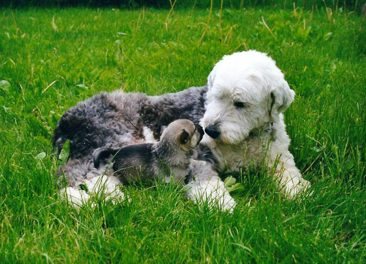 Puppy Jottje met Kelvin (Starlight van Wijlerhof)