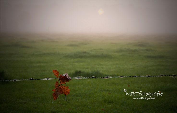 Herfstblad aan prikkeldraad