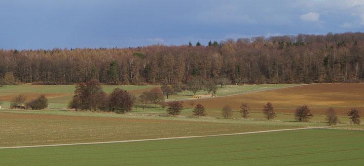 """Gönsbachbepflanzung und angrenzend Baumgrundstück am """"Schreinersch Weg"""" (April 2013)"""