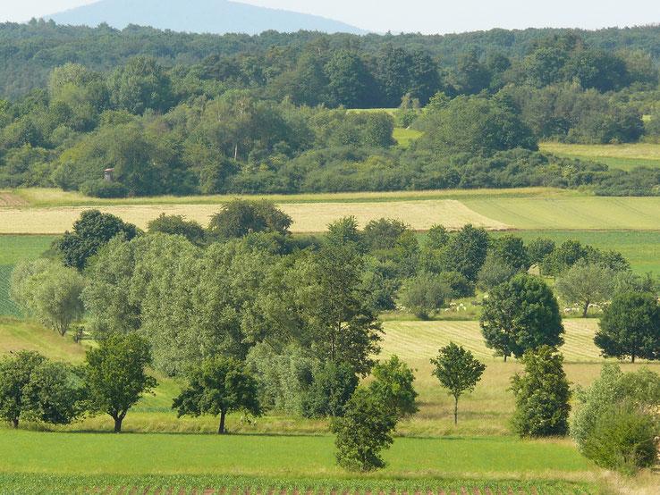 Der Läusköppel (Bildmitte, Südansicht) mit vorgelagerter Streuobstwiese. Im Vordergrund einige bewachsene Gemarkungsgräben