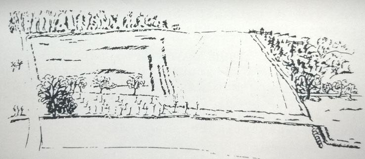 """Rechts oben, Litchkaut; waagerecht verläuft der Gönsbach; mitte-links, bepflanztes Grundstück am """"Schreinersch Weg"""". 22 Obstbäume, eine Linde, ein Nussbaum, 12 weitere Bäume und 57 Büsche.   (Zeichnung: Andrea Buch)"""