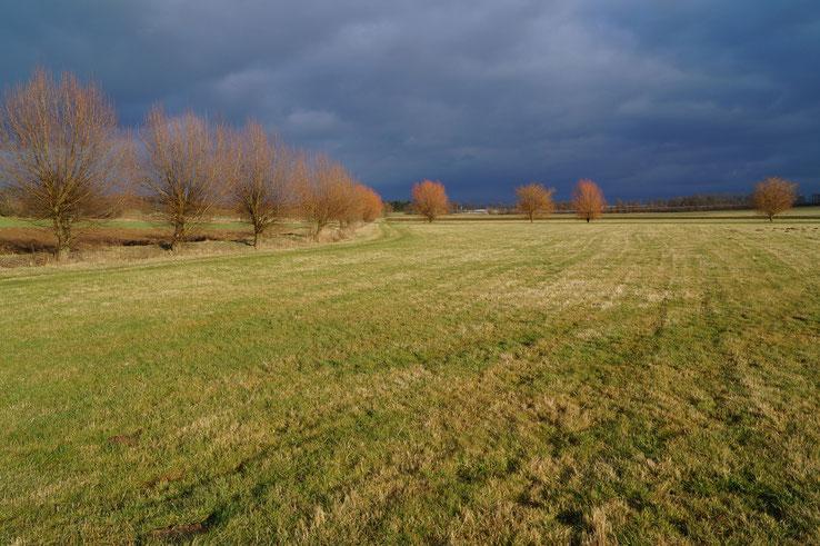 Weiden am Schafbach (hinten, rechts) und Grenzgraben (vorne, links), Januar 2013
