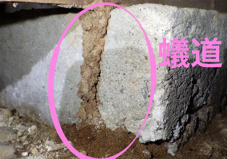 シロアリが作った蟻道
