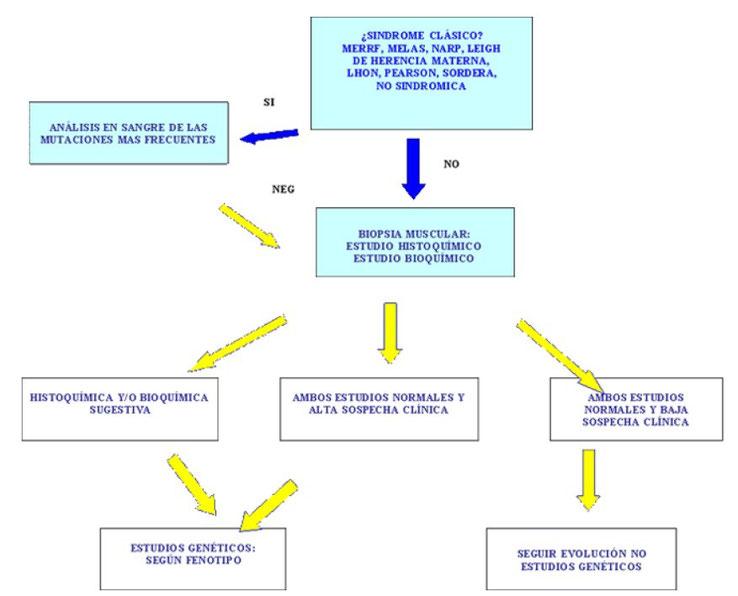 Algoritmo para diagnosticar enfermedades mitocondriales. Tomado de la Asociacion de enfermos de patologia mitocondrial, AEPMI