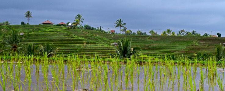 Circuit randonnée sur l'île de Bali
