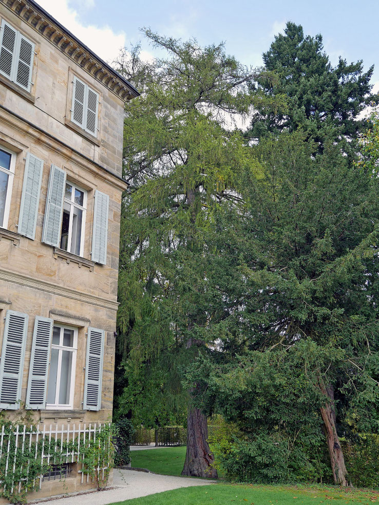 Lärche beim Schloss Fantaisie in Donndorf