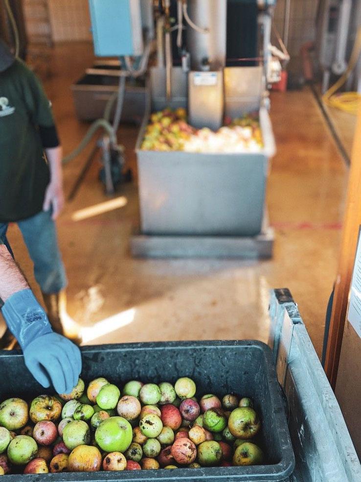 Apfelmost herstellen