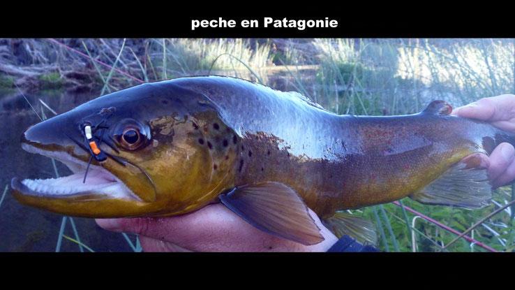 Photo: Rodolphe Avizou, guide de peche en Patagonie.