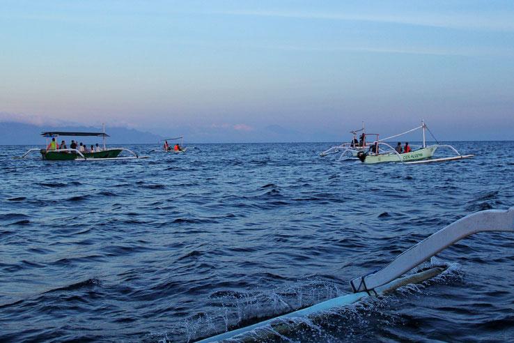"""Nur einige der 30 bis 40 Boote, die auf Delfin""""jagd"""" waren"""