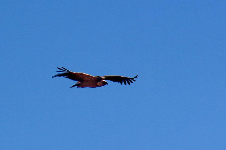 Le bel oiseau...