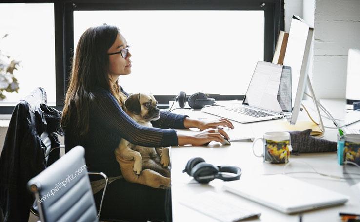 Ir a trabajar con tu perro, llevar a tu perro a la oficina