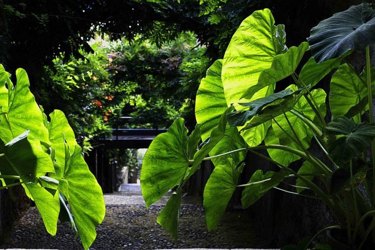 Photographie, Isola Madre, lac Majeur, îles borromées, jardins, escaliers, nature, végétation, été, vert, blanc, Mathieu Guillochon