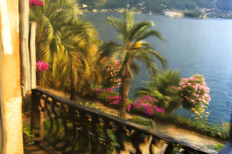Photographie, voyage, Italie, lac Majeur, îles borromées, isola Madre, nature, paon blanc, végétation, été, rose, bleu, Mathieu Guillochon