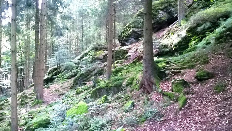 (aufgenommen beim Baumkronenwanderweg in Kopfing, September 2017)