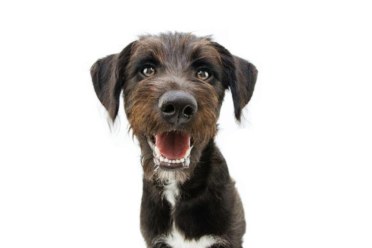 FeelGood Management · My Office Dog 2021 · Bürohunde als Benefit innerhalb deiner Unternehmenskultur. FeelGood @Work