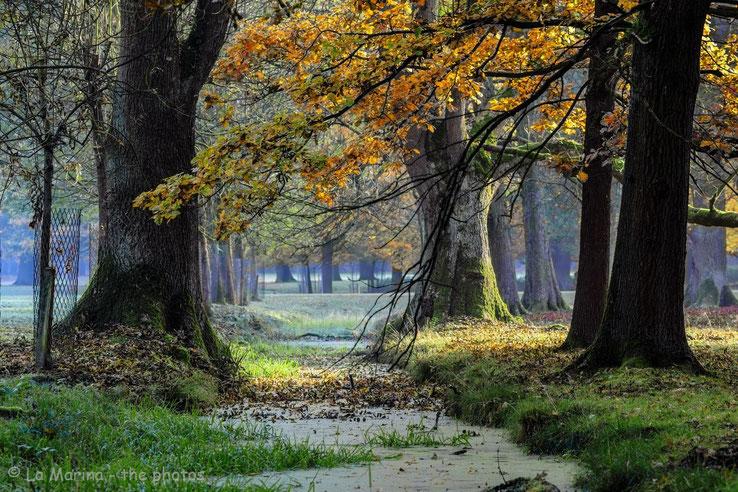 Herbststimmung im Tiergarten.