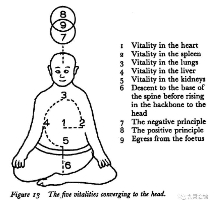 Die fünf Lebensenergien zusammenlaufend zum Kopf.