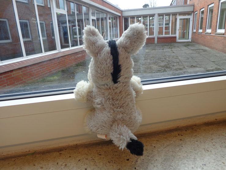 Esel hat Sehnsucht. Will raus. Spielen. Doch er muss in der Schule bleiben.
