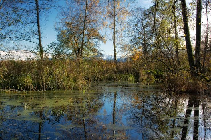 An einem schönen November Tag am Greifensee