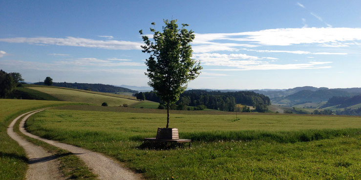 Bild: Aussicht auf dem Lünisberg Ursenbach