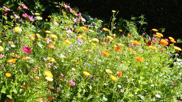 Wildblumenwiese, Blumen, wildblumen, natur, Garten