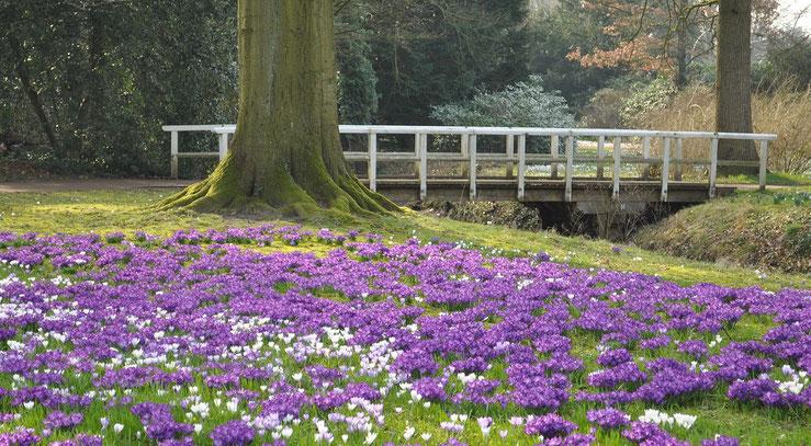 Frühling in OL