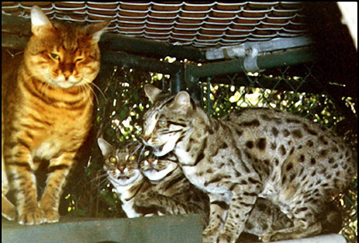 "Delhi - слева, справа его ""жены""- Millwood Praline, Millwood Pennybank, и Millwood Rorschach."