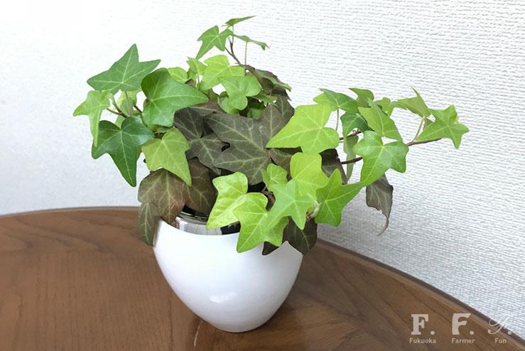 3ヶ月前の箱花に使用した緑が飾られています