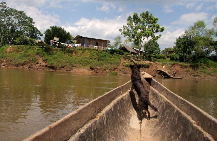 Šuarų sodybos prie Jaupio upės Ekvadoro Amazonijoje Moronos Santjago provincijoje