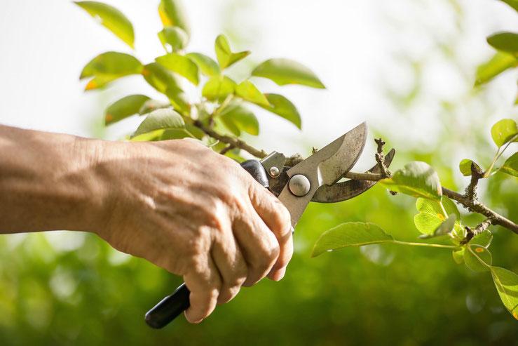 onderhoud tuinen en erven