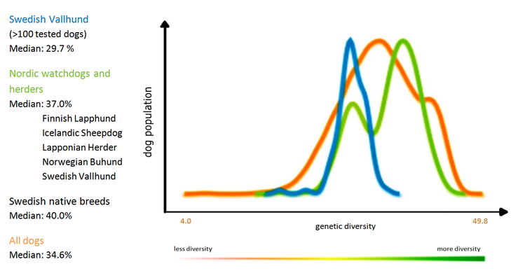 Graph 1 The genetic diversity of the Swedish Vallhund compared to other breeds (The Institute of Canine Biology)