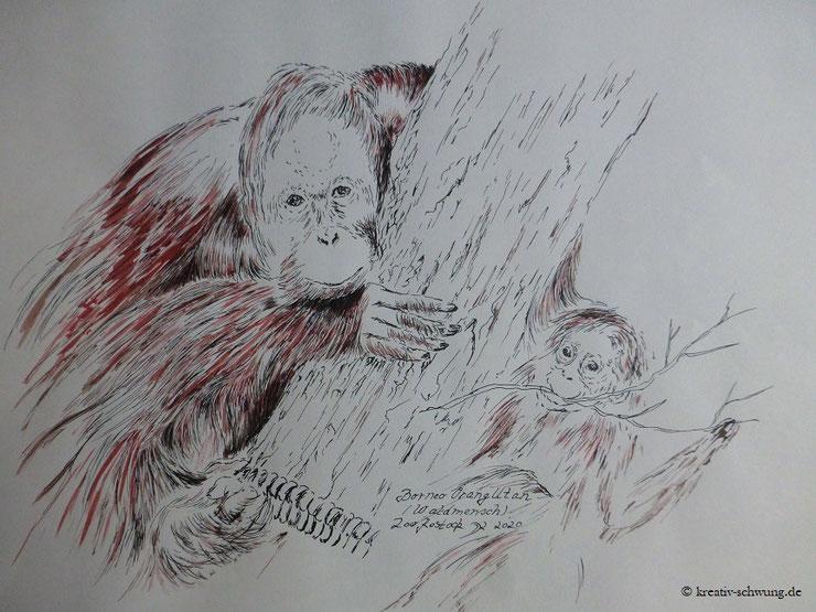 Borneo Orang-Utan, Zoo Rostock 2020